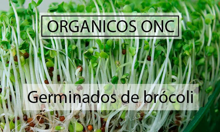 Germinados de Brócoli