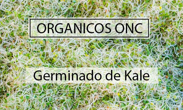 La gran Kale